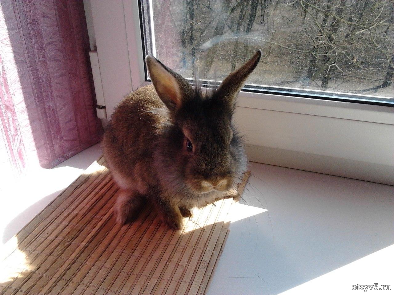 Декоративные кролики 94